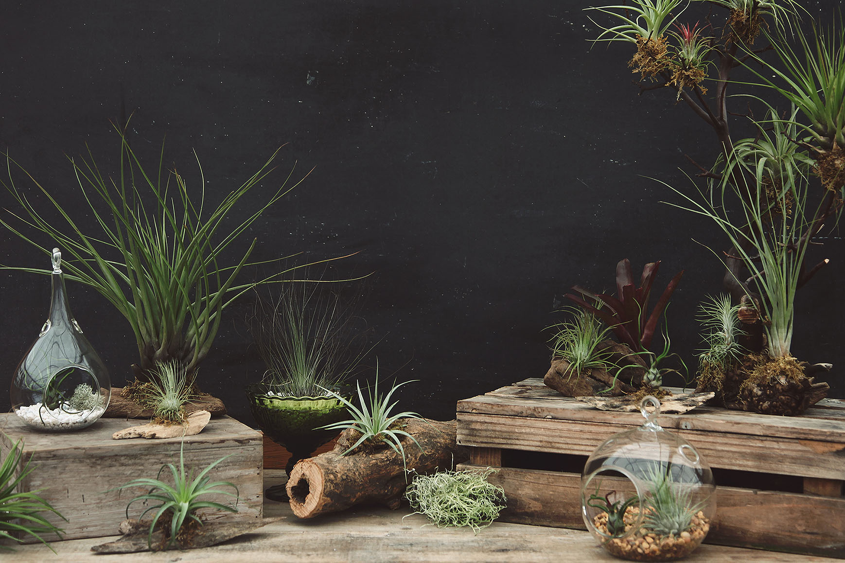 Air Plants Succulents Amp Cacti Hoen S Garden Center