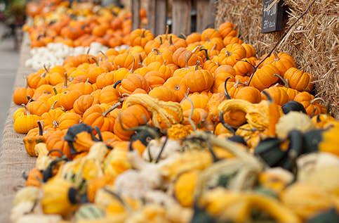 Miniature Pumpkins and Specialty Gourds