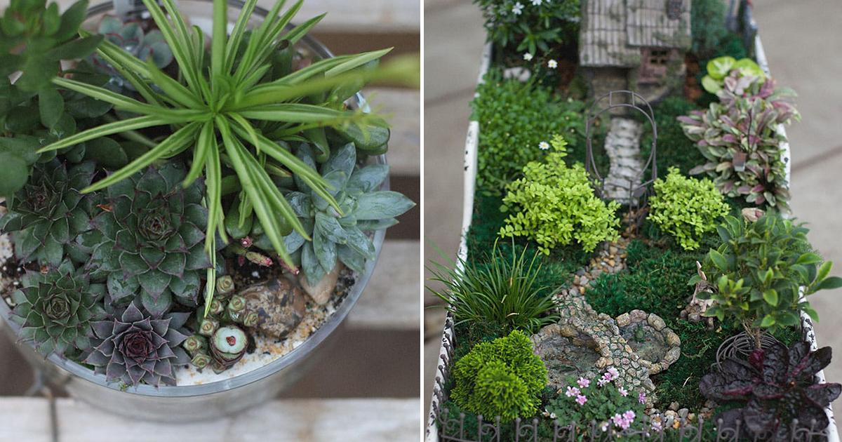 Terrariums Miniature Gardens Hoen 39 S Garden Center Landscaping